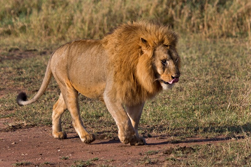 large_Lions_12-17.jpg
