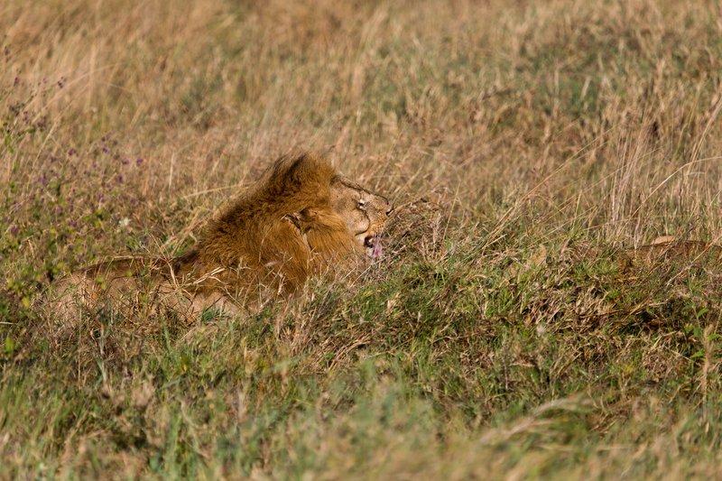 large_Lions_12-22.jpg