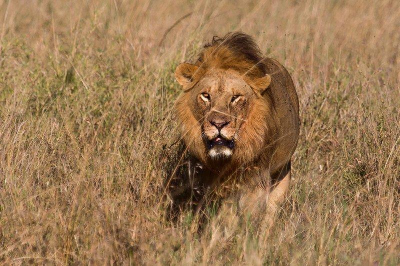 large_Lions_12-23.jpg