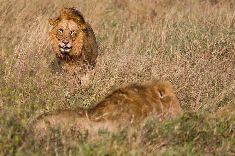large_Lions_12-24.jpg