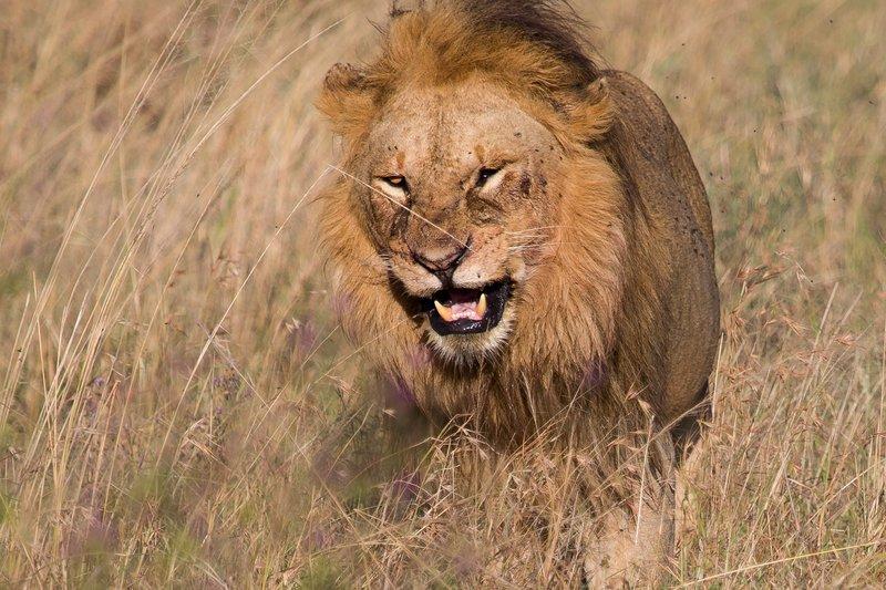 large_Lions_12-25.jpg
