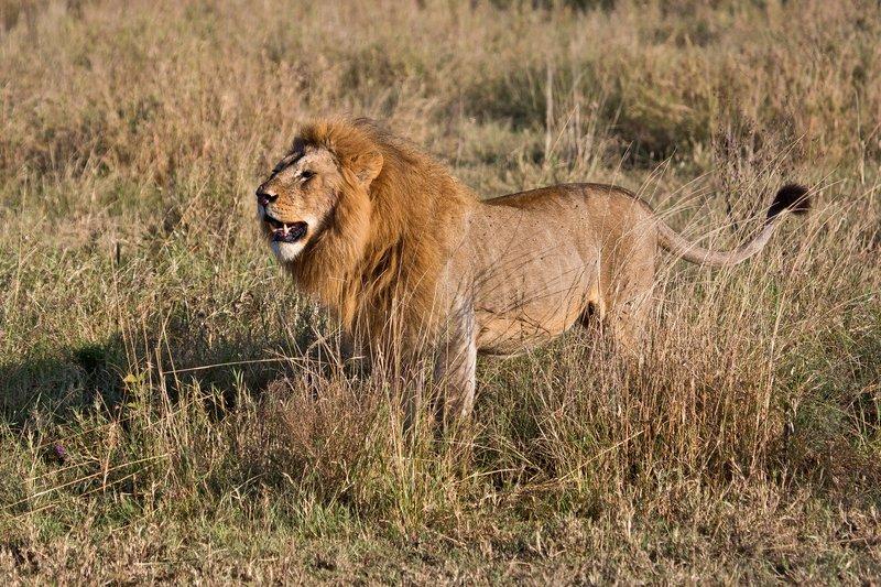 large_Lions_12-36.jpg