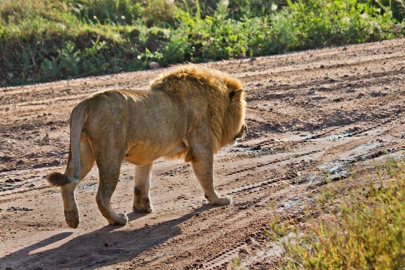 large_Lions_12-45.jpg