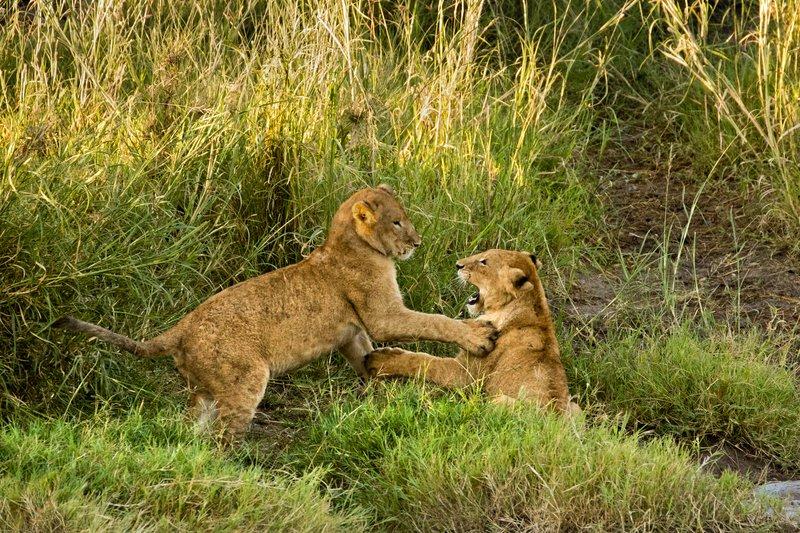 large_Lions_20.jpg
