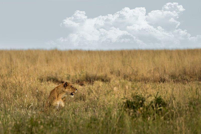 large_Lions_201.jpg