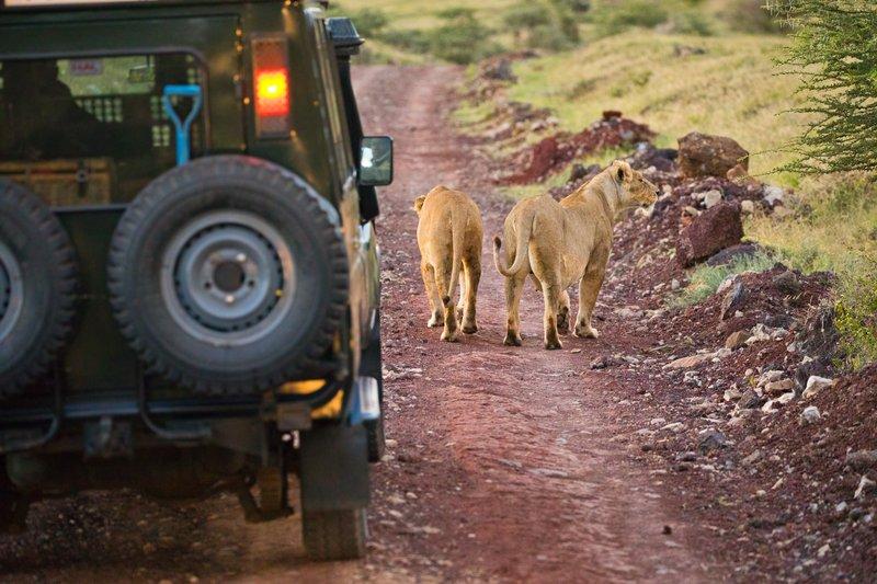large_Lions_6.jpg