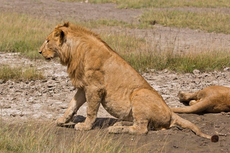 large_Lions_8-33.jpg
