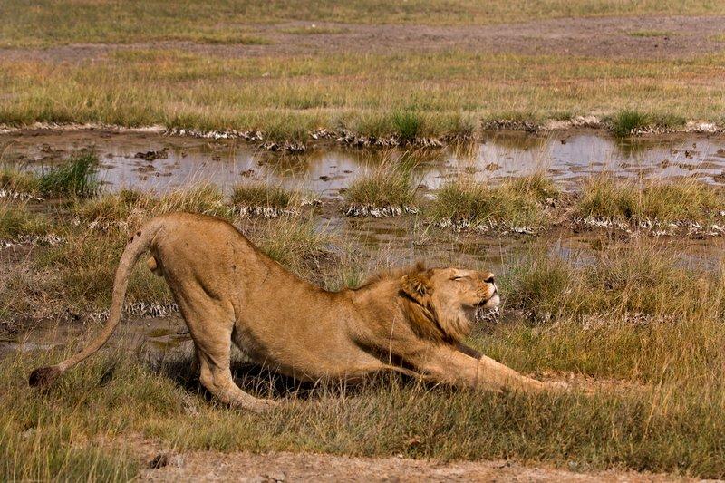 large_Lions_8-40.jpg