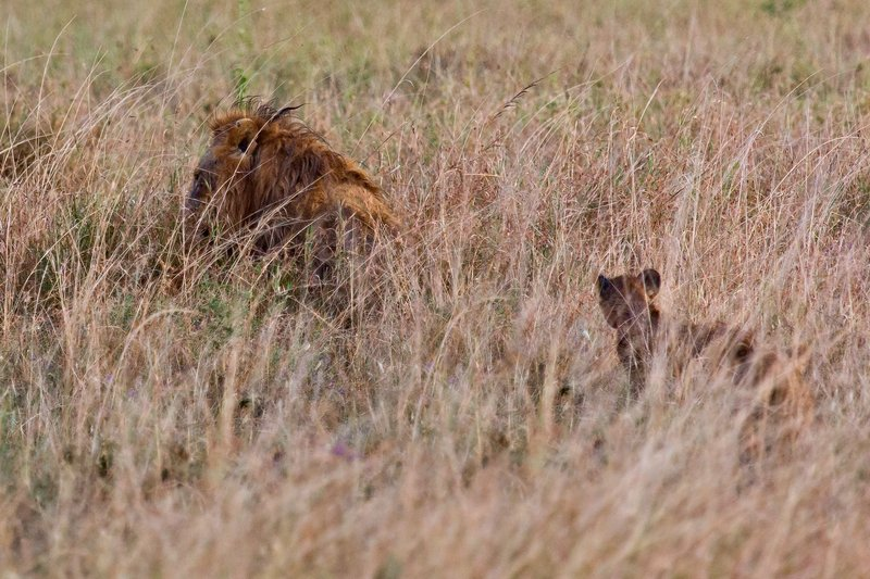 large_Lions_in_the_Rain_11-76.jpg
