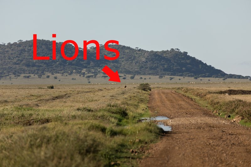 large_Lions_in_the_distance_2.jpg