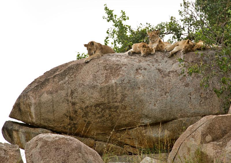 large_Lions_on_Kopje_1.jpg