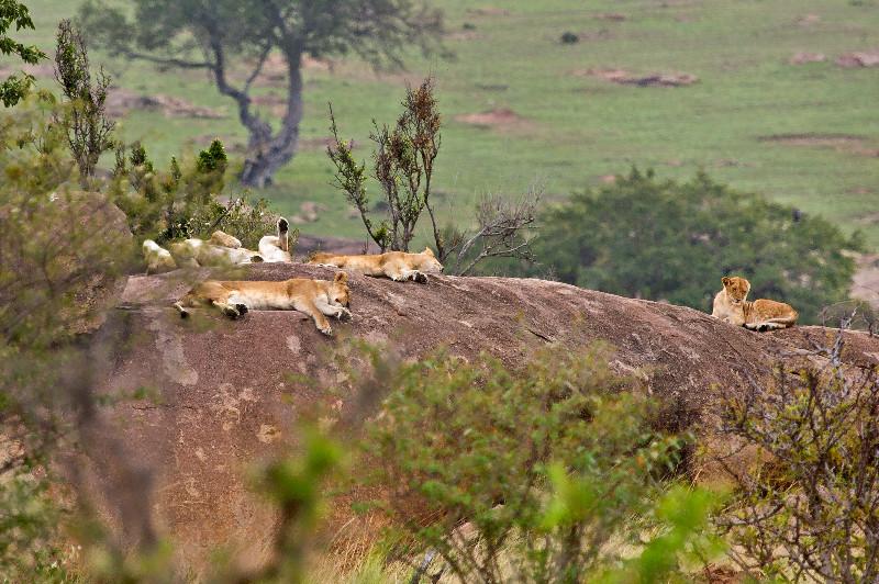 large_Lions_on_Kopje_3.jpg