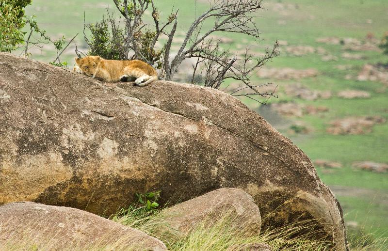 large_Lions_on_Kopje_5.jpg