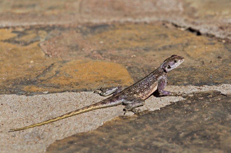 large_Lizard_10-1.jpg