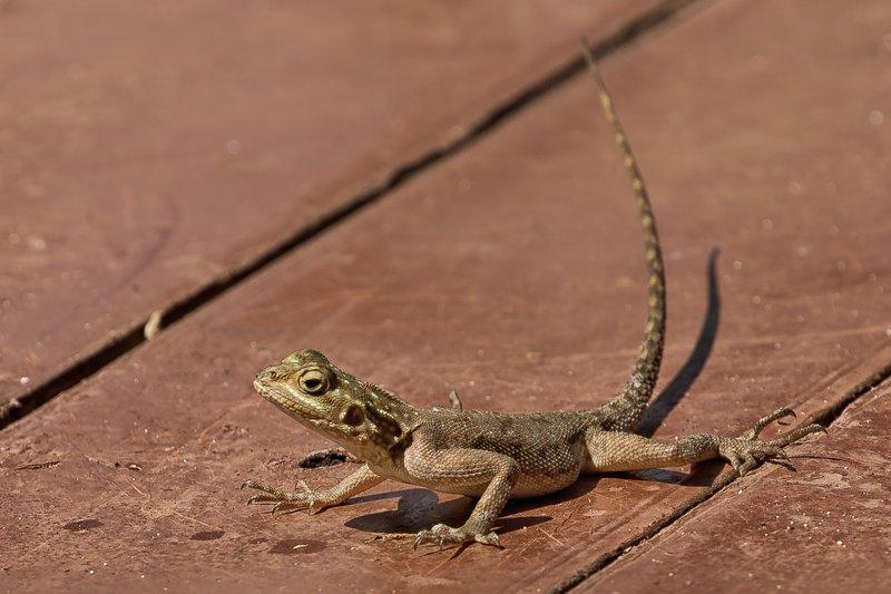 large_Lizard_11.jpg