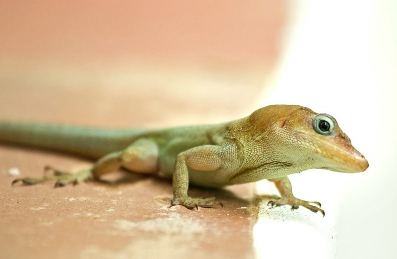 large_Lizard_2.jpg