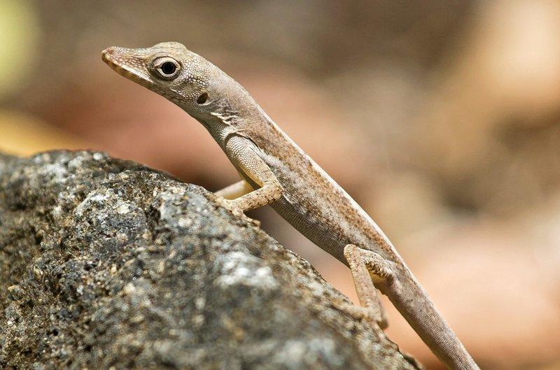 large_Lizard_6.jpg