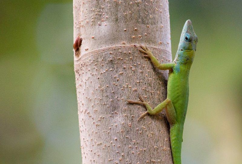 large_Lizard_62.jpg