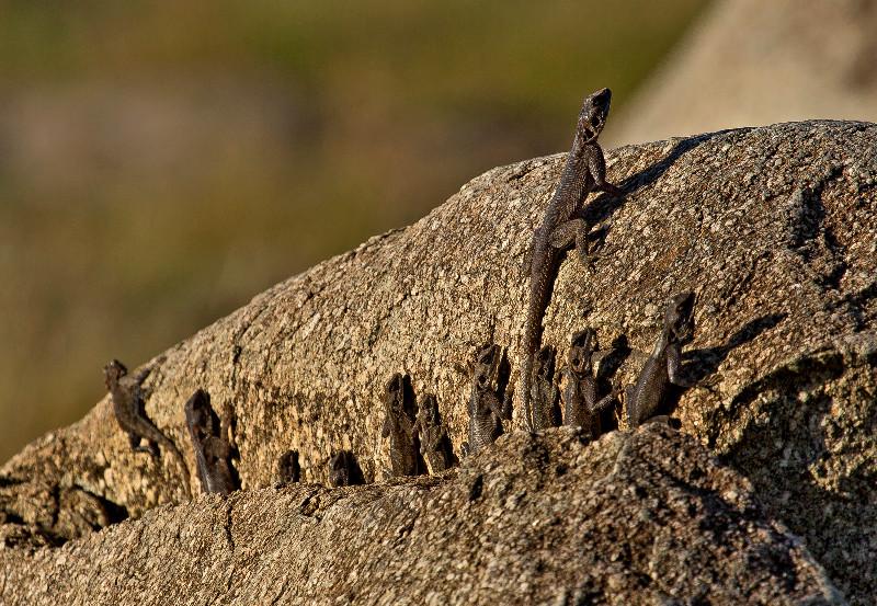 large_Lizard_Rock_1.jpg