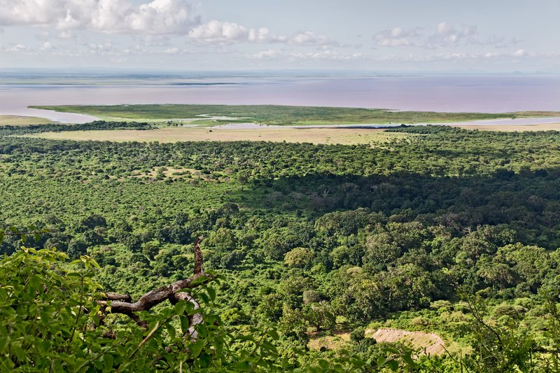 large_Looking_ou..e_Manyara_3.jpg