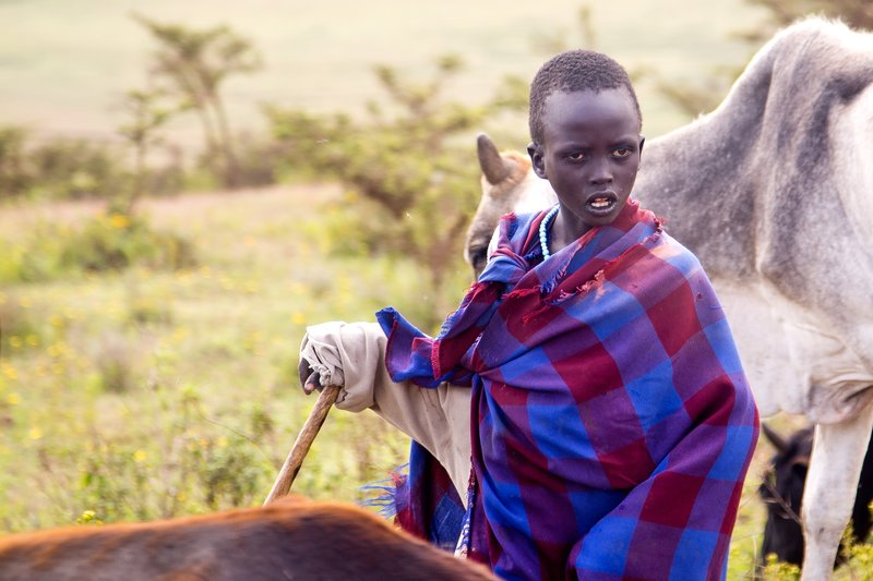 large_Maasai_Cattle_2.jpg