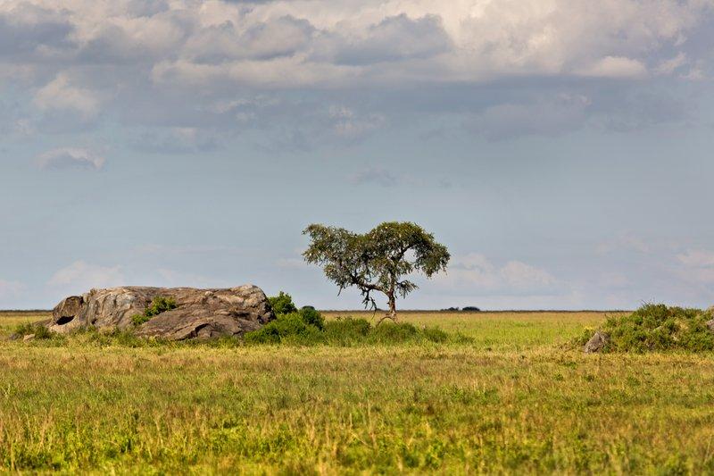 large_Maasai_Kopjes_9___1_.jpg