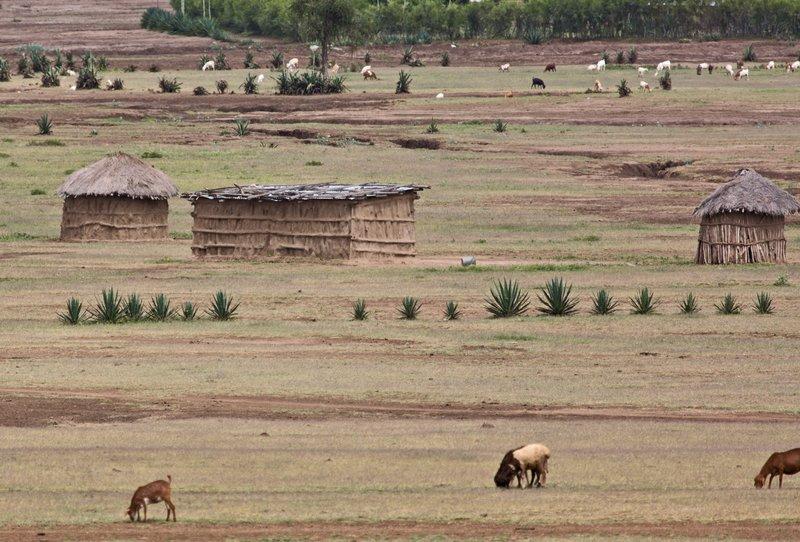 large_Maasai_Manyatta_2.jpg