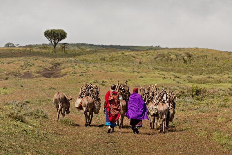 large_Maasai_and_Donkeys_1.jpg