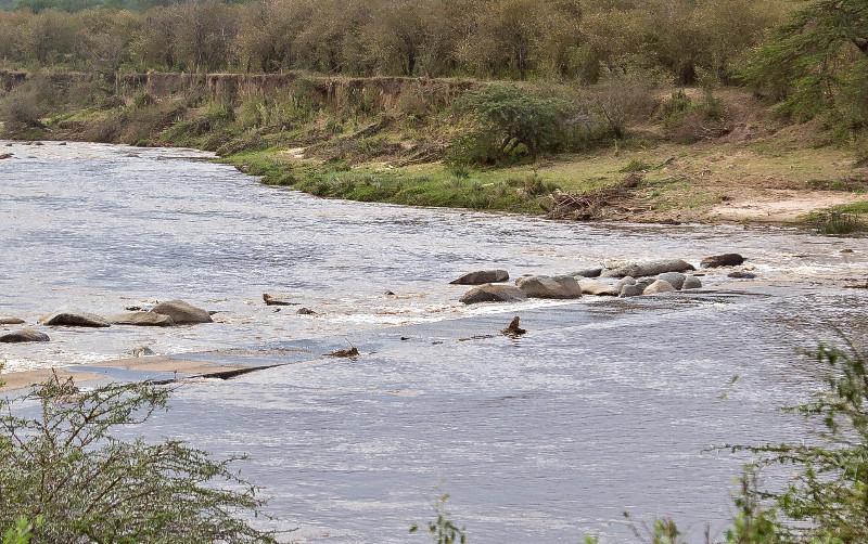 large_Mara_River..ing_Flooded.jpg