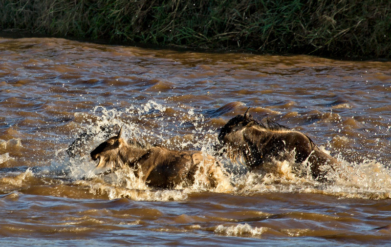 large_Mara_River..ing___2__16.jpg