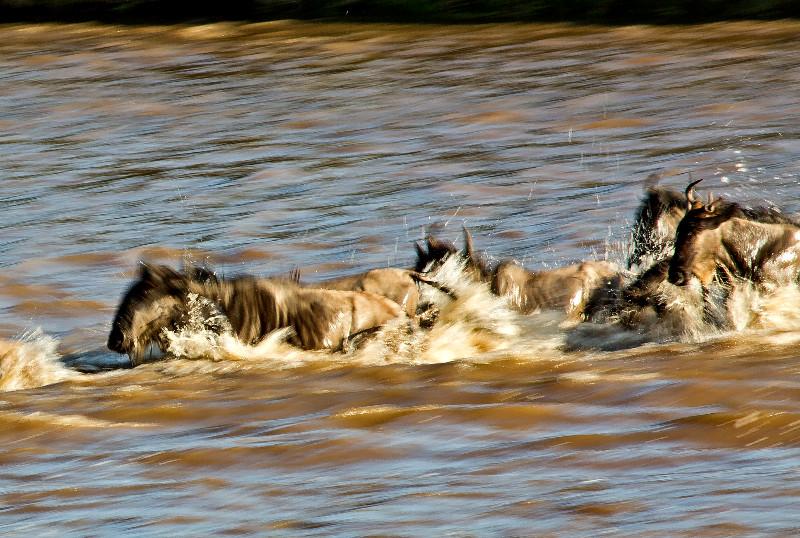 large_Mara_River..ing___2__18.jpg