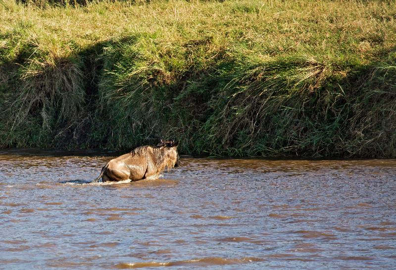 large_Mara_River..ing___2__19.jpg
