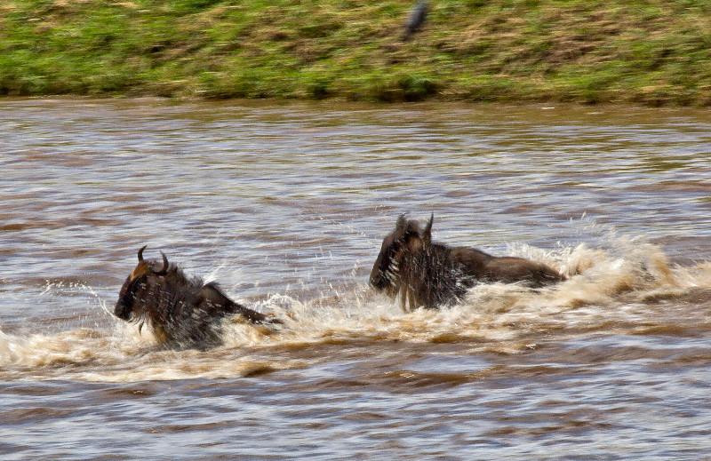large_Mara_River..ing___3__12.jpg