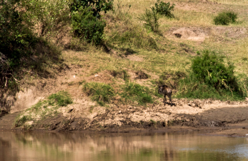 large_Mara_River..ing___3__18.jpg
