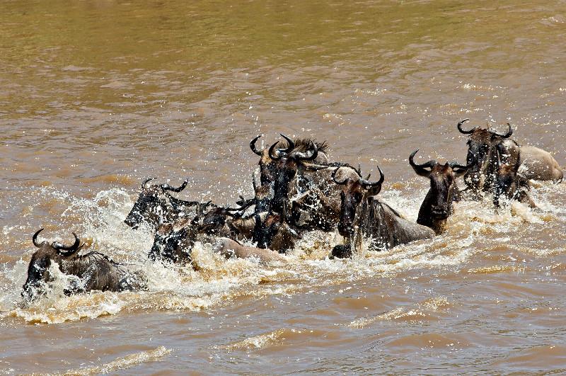 large_Mara_River..sing___1__4.jpg