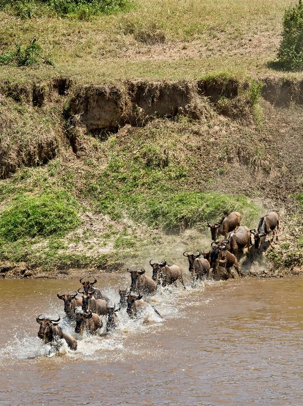 large_Mara_River..sing___1__6.jpg