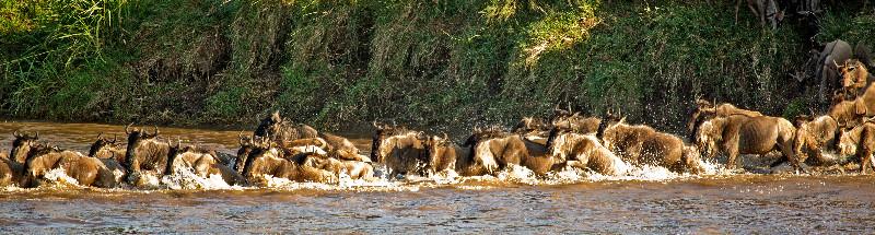 large_Mara_River..sing___2__8.jpg
