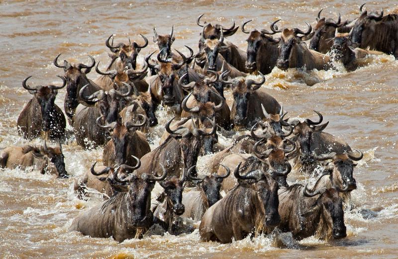 large_Mara_River..sing___3__8.jpg