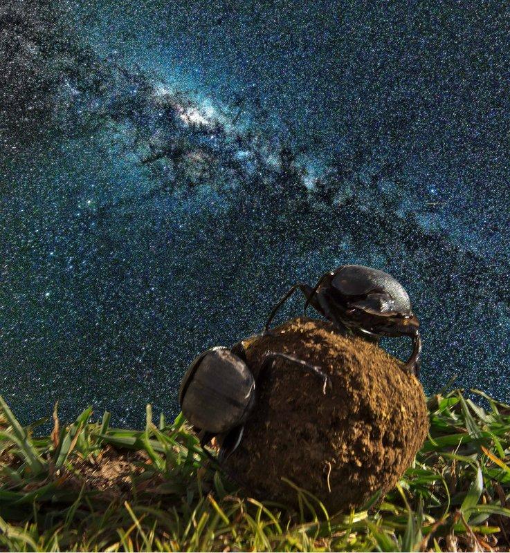large_Milky_Way.jpg