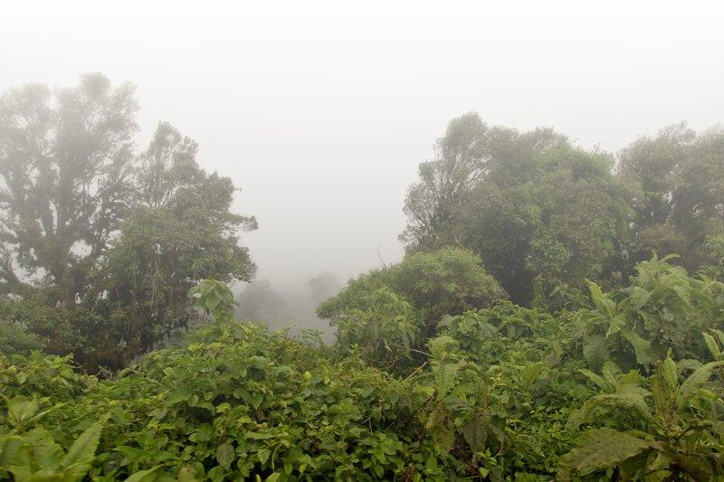 large_Mist_1.jpg