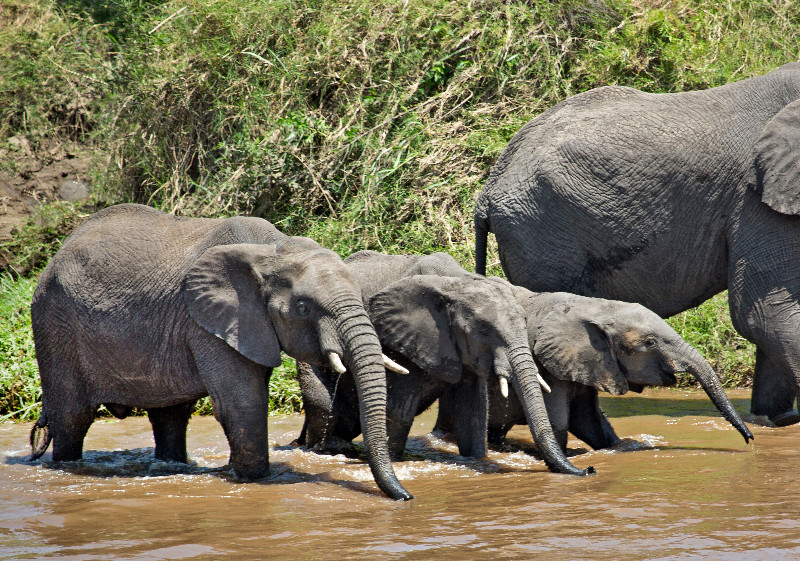large_More_Elephants_2.jpg