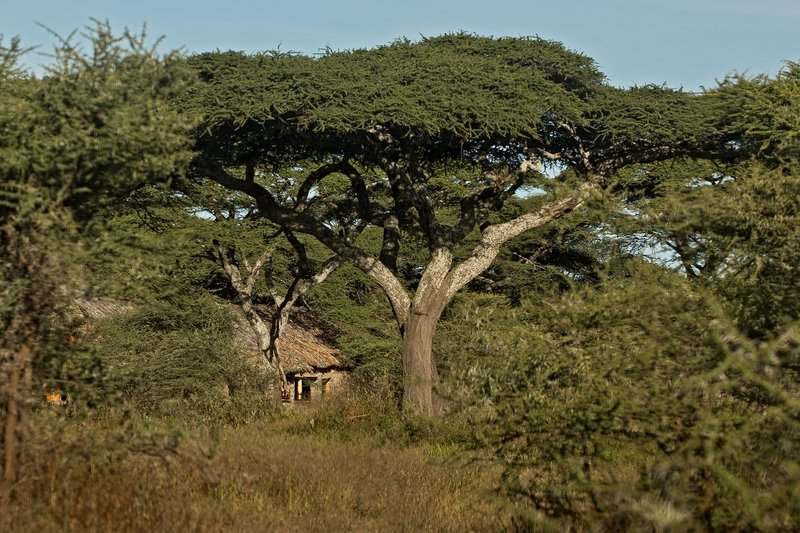 large_Ndutu_Lodge_2.jpg