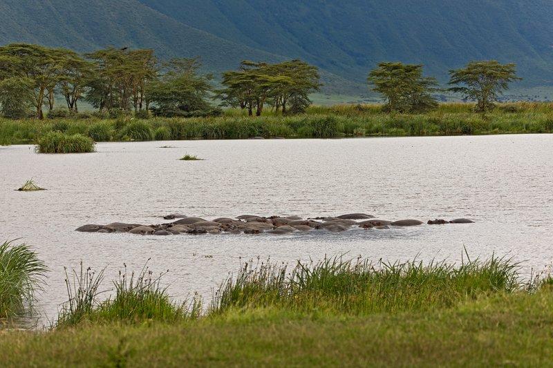 large_Ngoitoktok.._-_Hippos_1.jpg