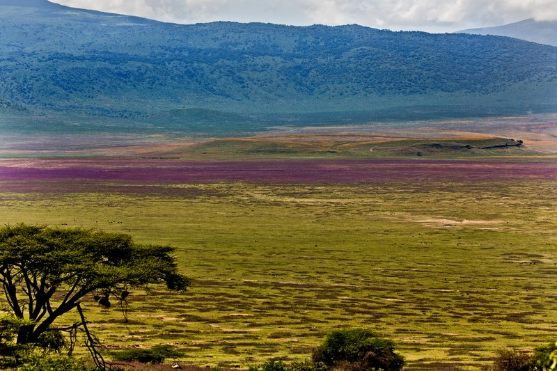 large_Ngorongoro..ent_Road_21.jpg