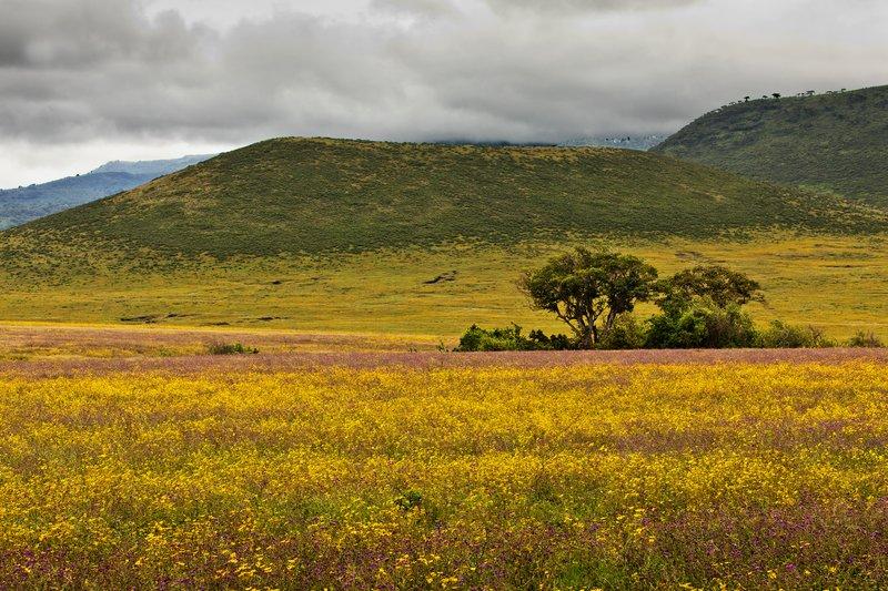large_Ngorongoro_Crater_52.jpg