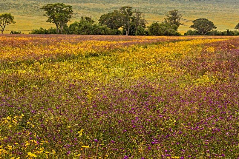 large_Ngorongoro_Crater_56.jpg