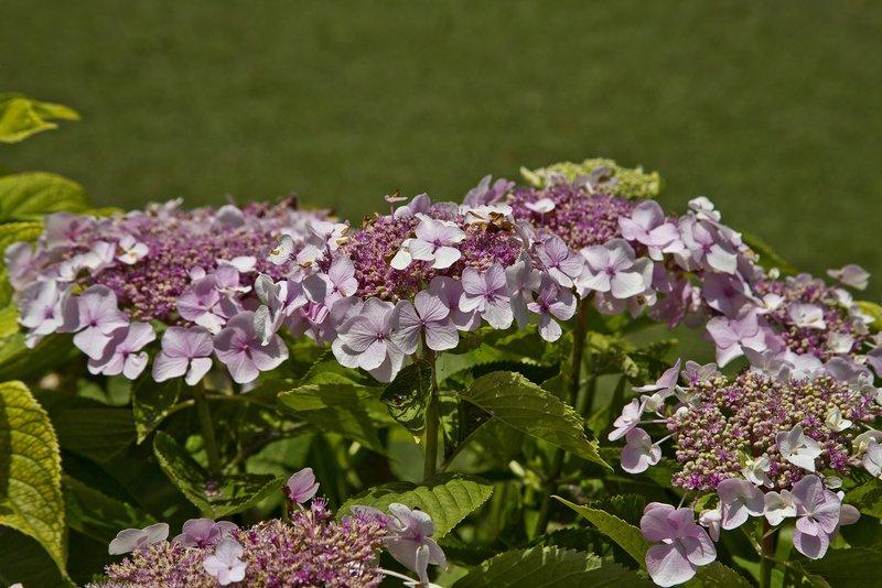 large_Nishat_Gardens_4A.jpg