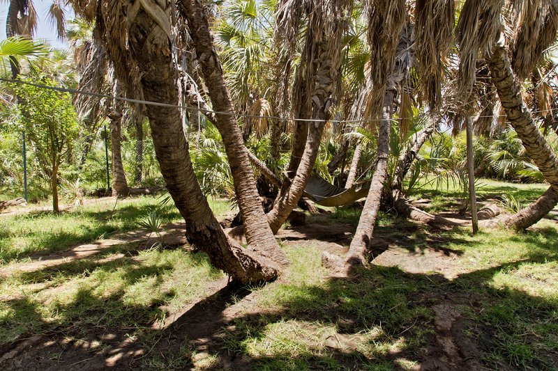 large_Palm_Shade_Camp_11.jpg
