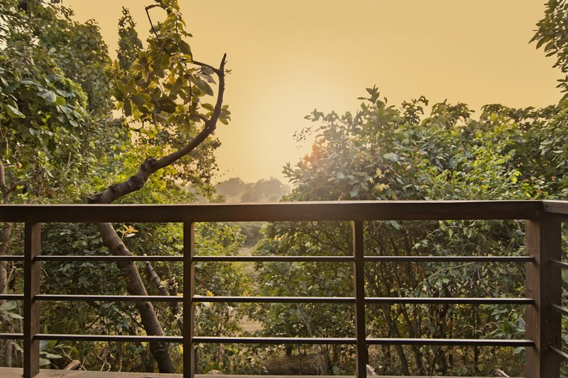large_Pench_Tree..e_Balcony_1.jpg
