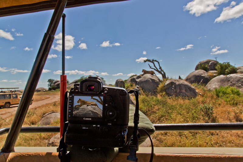 large_Photographing_the_Lions_1.jpg